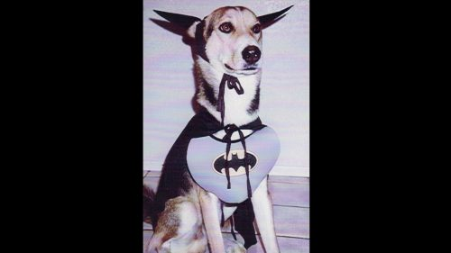 Dog Costume Bat Dog