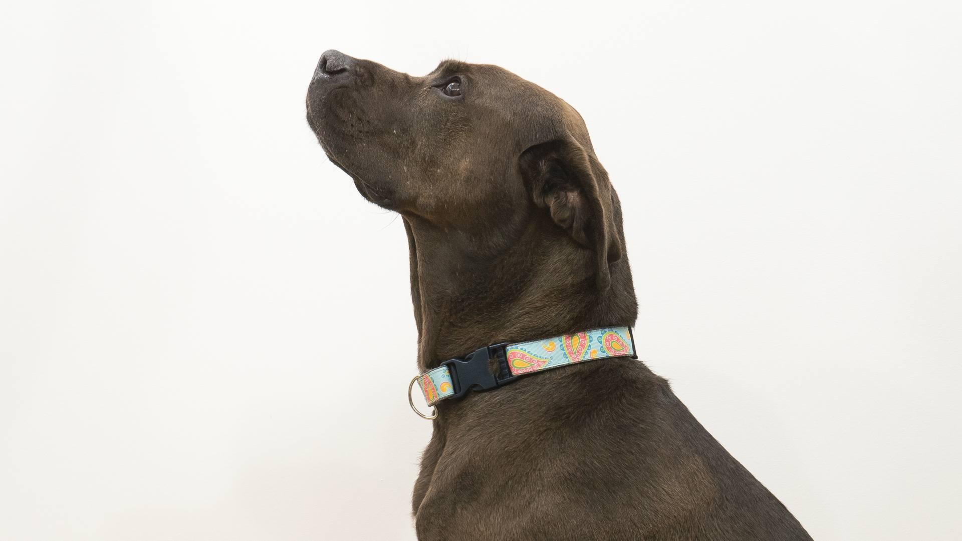 Rescue Dog To Super Dog Updates