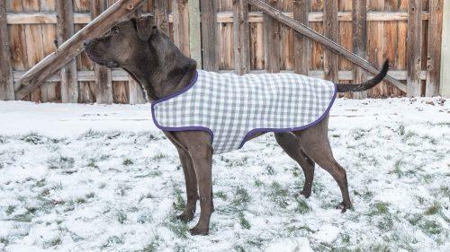 Dog Coat Standing