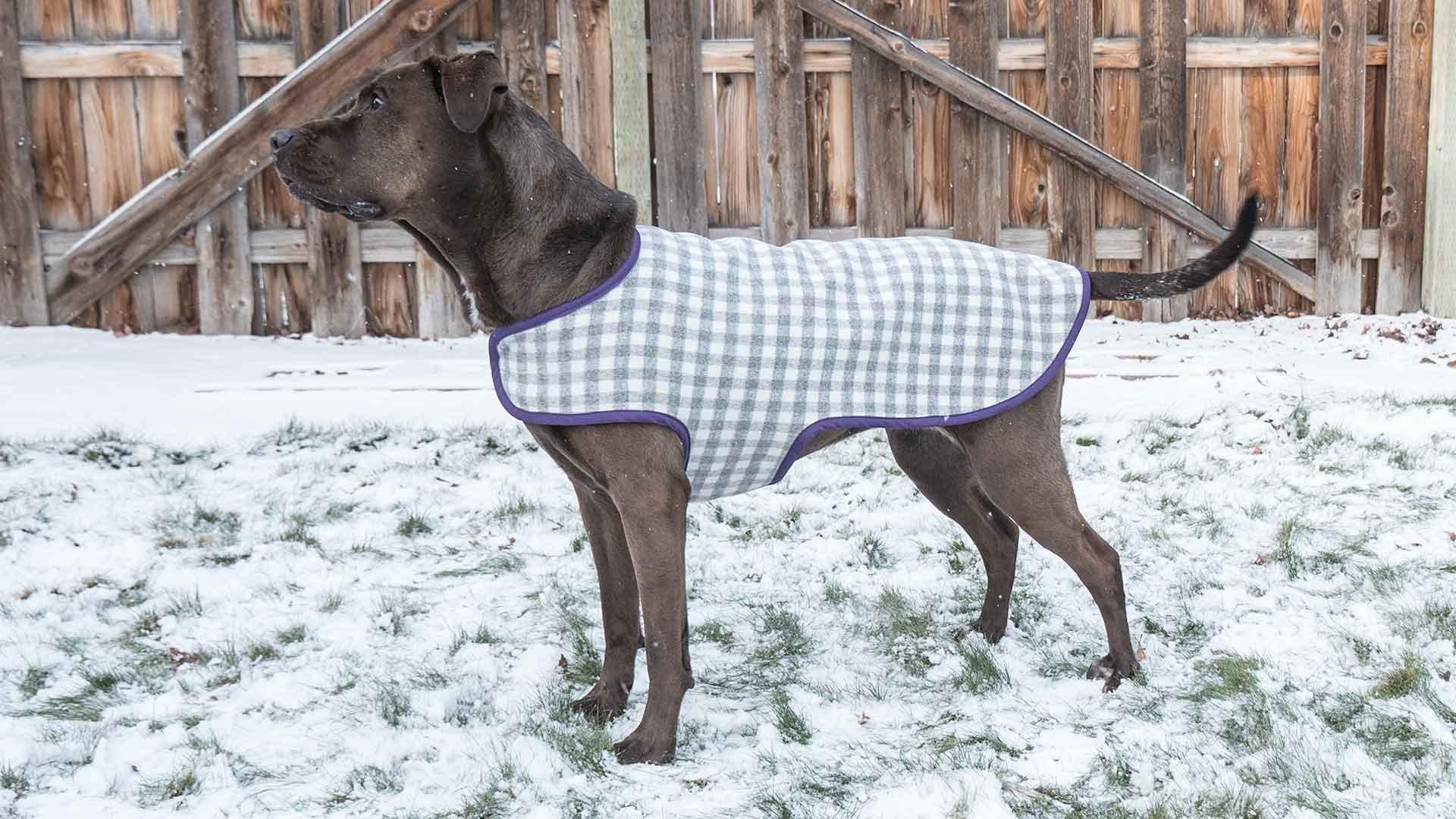 dog coat template - dog coat professor pincushion