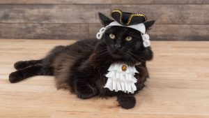 Pet Costume Colonial