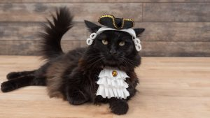 Pet Costume Colonial Face